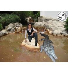 Bronze animalier :Crocodile en bronze BRZ45 ( H .30 x L :300 Cm ) Poids : 128 Kg
