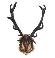 Trophée de chasse BRZ1367-45 ( H .114 x L .76 Cm ) Poids : 58 Kg
