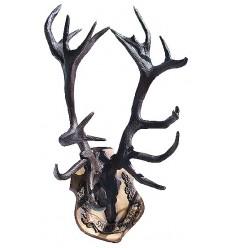 Trophée de chasse BRZ1368-45 ( H .114 x L .66 Cm ) Poids : 58 Kg
